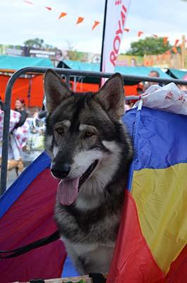 image-huishond