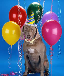 hond_party